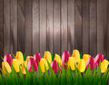 Nature spring background with colorful tulips on wooden sign.