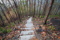 Nature Study Trail In The Forest