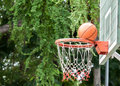 Nature surrounding basketball hoop this shot is near miss Stock Photography