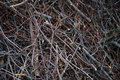 Nature texture of brushwood
