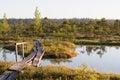 Nature Trail In A Bog