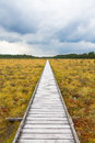 Nature trail to a wooden footbridge Royalty Free Stock Photo