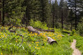 Nature trail wildflowers near paul lake bc Royalty Free Stock Photography