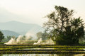 Nature Tree And Rice Field In ...