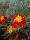 Nature vibrant colours glorify your garden Royalty Free Stock Photos