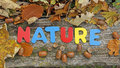 Nature Written In Autumn