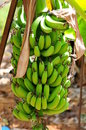 Natured banana Stock Photos