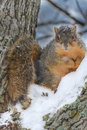 Natures looks with feet of snow on the ground the mystery of survival is finding that nut Royalty Free Stock Photography