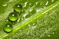 Natures pure green pearl drops Royalty Free Stock Photo