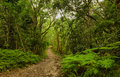Natures valley forest path at western cape south africa Stock Photography