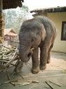 stock image of  Naughty baby elephant