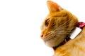 Naughty cat Royalty Free Stock Photo