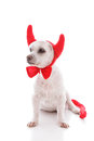 Naughty devil dog in costume horns and tail white background Stock Photo