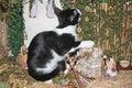 Naughty Kitty Royalty Free Stock Photo