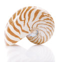 Nautilus pompilius sea shell,  Stock Photography