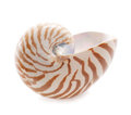 Nautilus pompilius sea shell  on white Royalty Free Stock Photography