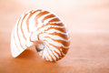 Nautilus pompilius shell on leather super shallow dof Stock Photos