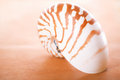Nautilus pompilius shell on leather super shallow dof Royalty Free Stock Images
