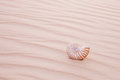 Nautilus pompilius shell in sand dune Stock Photo
