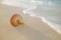 Nautilus sea shell on golden sand beach in  soft sunset light Royalty Free Stock Photo