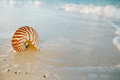 Nautilus sea shell on golden sand beach in  soft sunset light Royalty Free Stock Photo