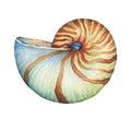 Nautilus sea shell. Marine design. Royalty Free Stock Photo