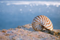Nautilus seashell sand on sunrise and ocean Stock Image