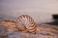 Nautilus seashell sand on sunrise and ocean dark light Royalty Free Stock Images