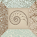 Nautilus shell background. Royalty Free Stock Images