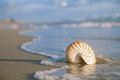 Nautilus shell on beach  and blue sea Royalty Free Stock Image