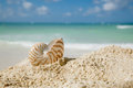 Nautilus shell on beach  and blue tropical sea Royalty Free Stock Photos