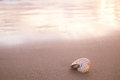 Nautilus shell on beach , golden sunrise Stock Photo
