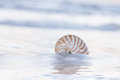 Nautilus shell on beach pale sunrise light and tropical sea with blue Stock Image