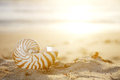 Nautilus shell on beach  and sun beams Royalty Free Stock Image