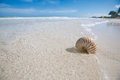 Nautilus shell blue sea wave shallow dof Royalty Free Stock Photos