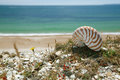 Nautilus shell on cliffs top and sea from the near bournemouth uk shallow dof Royalty Free Stock Photography
