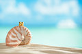 Nautilus shell and crown with ocean beach and seascape shallow dof Stock Image