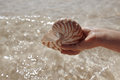 Nautilus shell  in a girl hand Royalty Free Stock Photography
