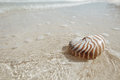 Nautilus shell in golden sea wave shallow dof on beach Stock Images