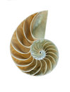 Nautilus shell great detailed shot amazing spiral fossilized Stock Images