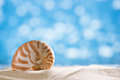 Nautilus shell with ocean beach and glitter seascape small shallow dof Royalty Free Stock Image
