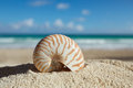 Nautilus shell  with ocean , beach and seascape, shallow dof Stock Image