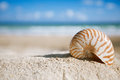 Nautilus shell with ocean beach and seascape small shallow dof Stock Photo