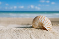 Nautilus shell with ocean beach and seascape small shallow dof Royalty Free Stock Images