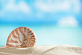 Nautilus shell with ocean beach and seascape small shallow dof Royalty Free Stock Image