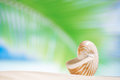 Nautilus shell with palm leaf beach and palm leaf seascape shallow dof Royalty Free Stock Images