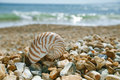 Nautilus shell on peblle beach and sea waves near bournemouth uk shallow dof Royalty Free Stock Images