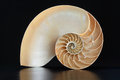 Nautilus shell section on black Royalty Free Stock Photo