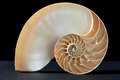 Nautilus shell section pattern on black Royalty Free Stock Photo