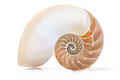 Nautilus shell section with soft shadow Royalty Free Stock Photo